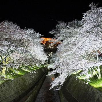 三井寺ライトアップ