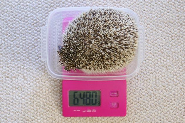 体重測定0417