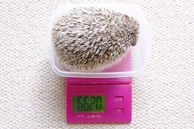 体重測定0501
