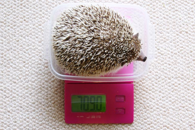 体重測定0529