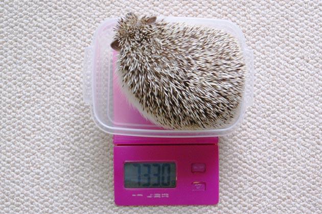 体重測定0612