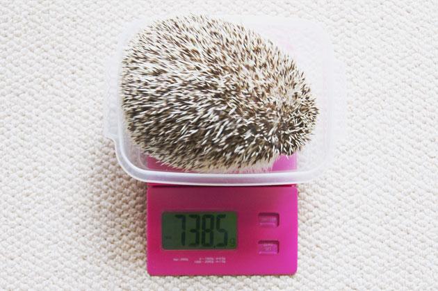 体重測定0718