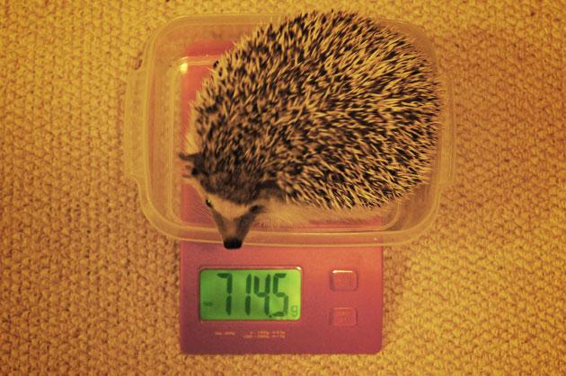 体重測定0422
