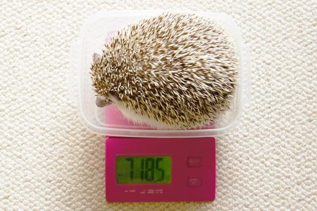 体重測定0603