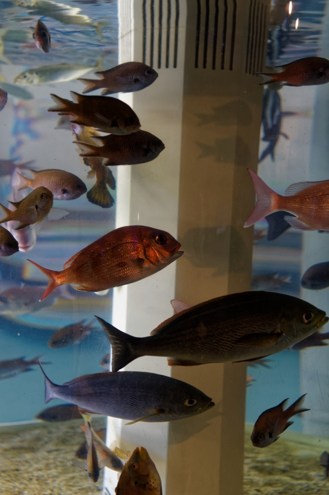 なぎさ水族館
