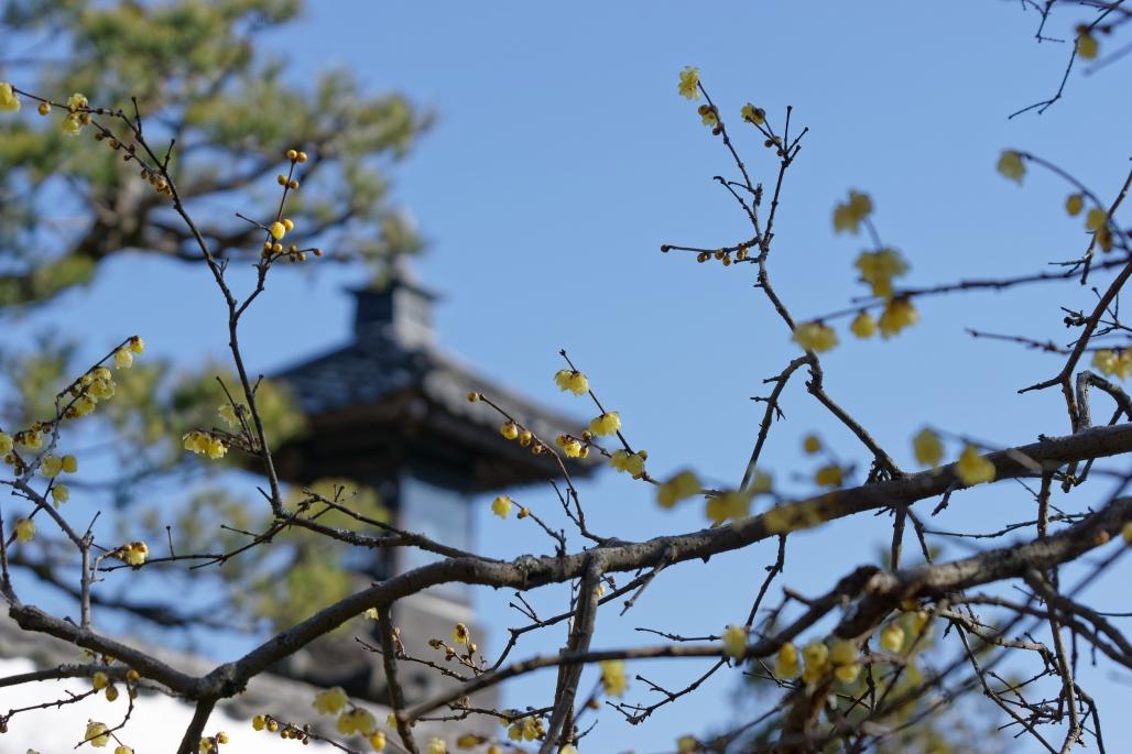観音寺の十六羅漢