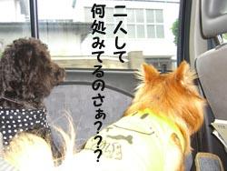 こはたん&桃太郎3