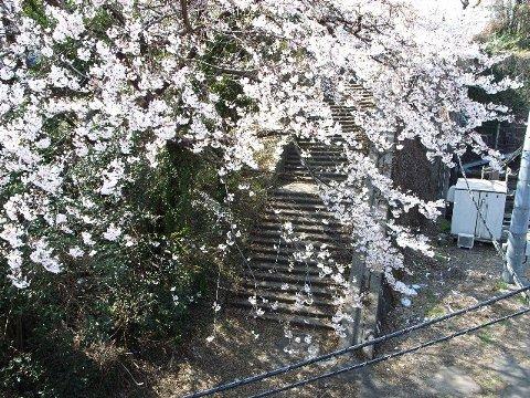 花見の季節がやって来た(カラー)