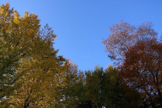 秋を通り越して
