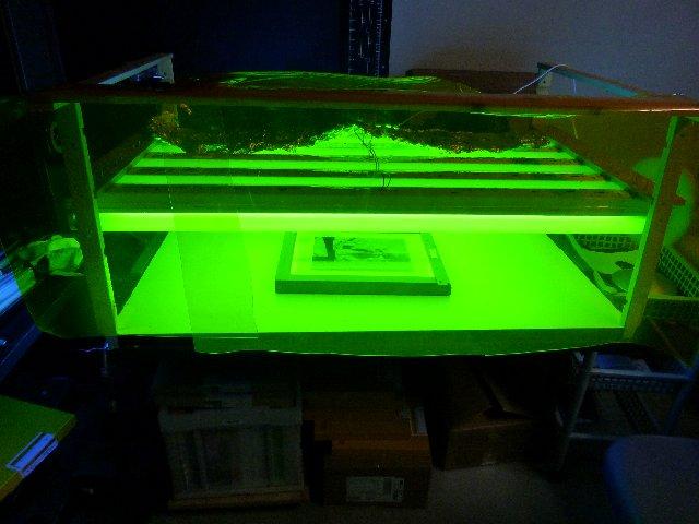 紫外線露光機