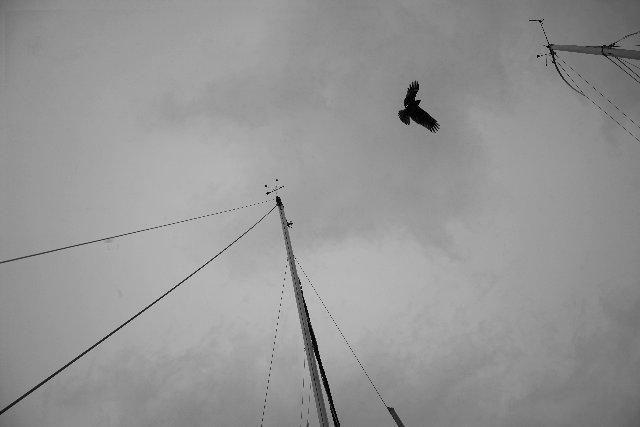 江ノ島の鳶