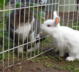 ユリイカ ウサギと猫