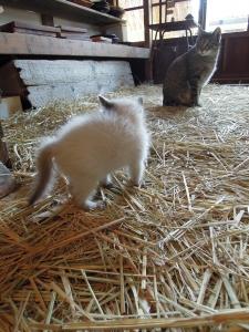 ロクを威嚇する子猫 ユリイカにて