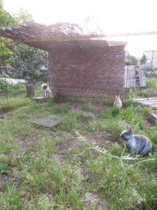 ユリイカ ウサギの運動場