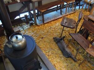 薪ストーブ 猫 イチョウの絨毯