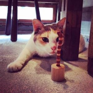 アナゴペン ニシキアナゴ チンアナゴ 猫