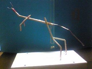 テラノ骨格