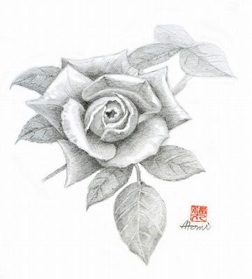 薔薇ロイヤルサンセット