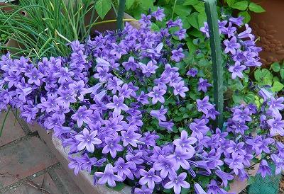 庭で咲く花