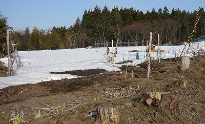 4月2日の畑