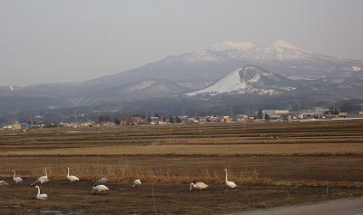 八甲田山と白鳥