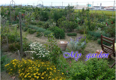 8月27日のmy garden