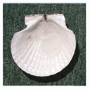 ホタテ貝殻皿