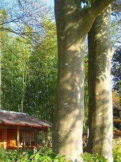 やさしい木の色