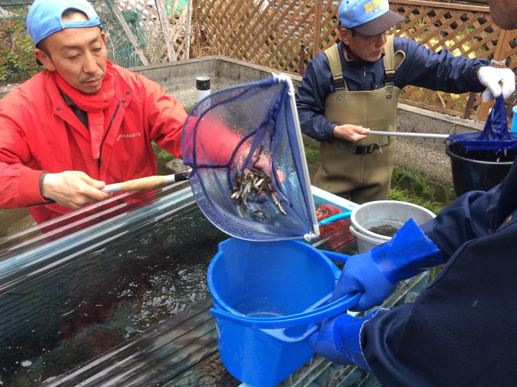 釣り場の水槽作業