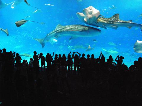@Churaumi Aquarium