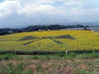 2011/08/11 ひまわり畑