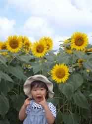 2012/08/12 明野ひまわり