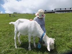 2012/08/12 まきば牧場 ヤギ