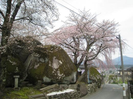 三石の枝垂れ桜