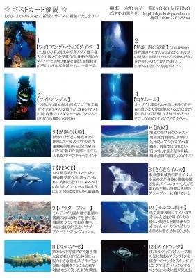 水野京子水中写真ポストカード