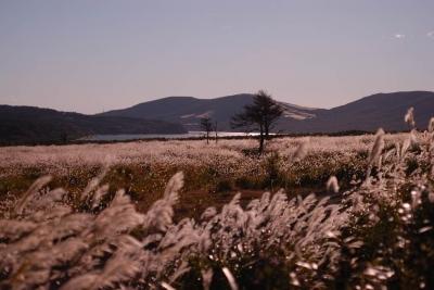 富士演習所から山中湖を望む。。。