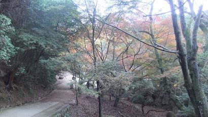 紅葉谷コースを歩き振りかえる