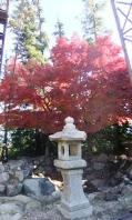 石灯篭傍の紅葉