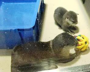 おもちゃで遊ぶジュニアです