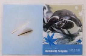 ペンギン羽根カード