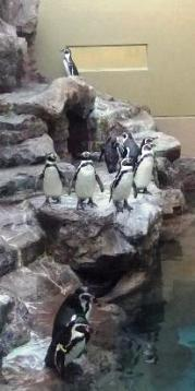 屋上広場のペンギンさん