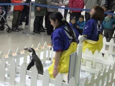 おともだちになりたいペンギンさん