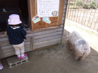 0517みさき公園2.jpg