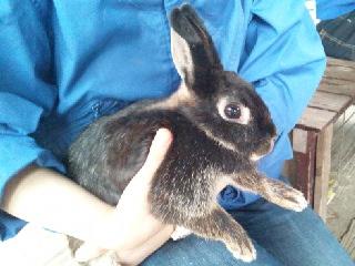 11日ウサギ.jpg