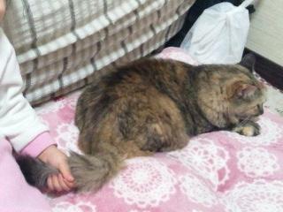 1日猫受難.jpg