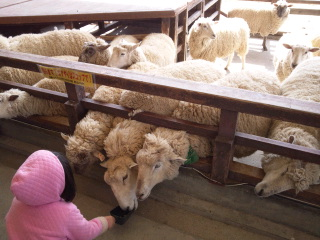 26日羊.jpg