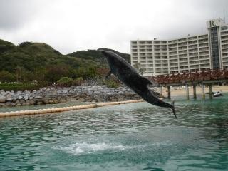 イルカとホテル