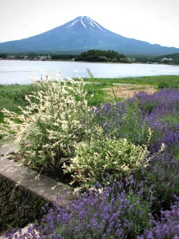 Vol.280 ハーブフェステバル 〜 大石公園(河口湖)
