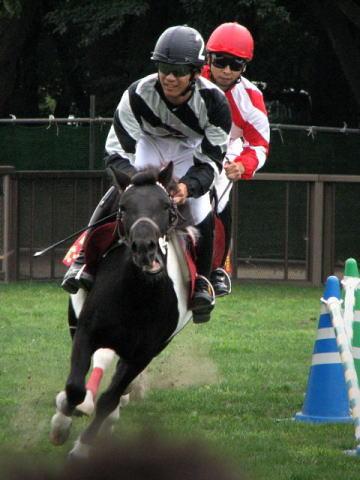 Vol.290 「愛馬の日」 流鏑馬やばんえい競馬 〜 世田谷 馬事公苑