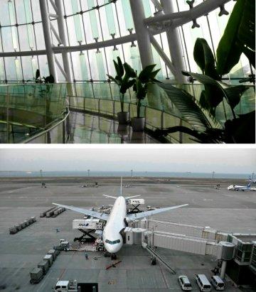 Vol.324 青い牛に再会する 〜 羽田空港